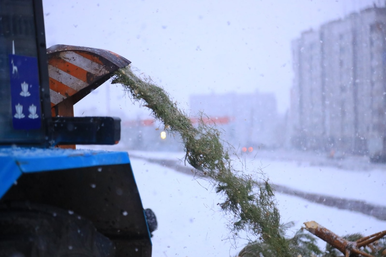 Как в Новокуйбышевске перерабатывают елки